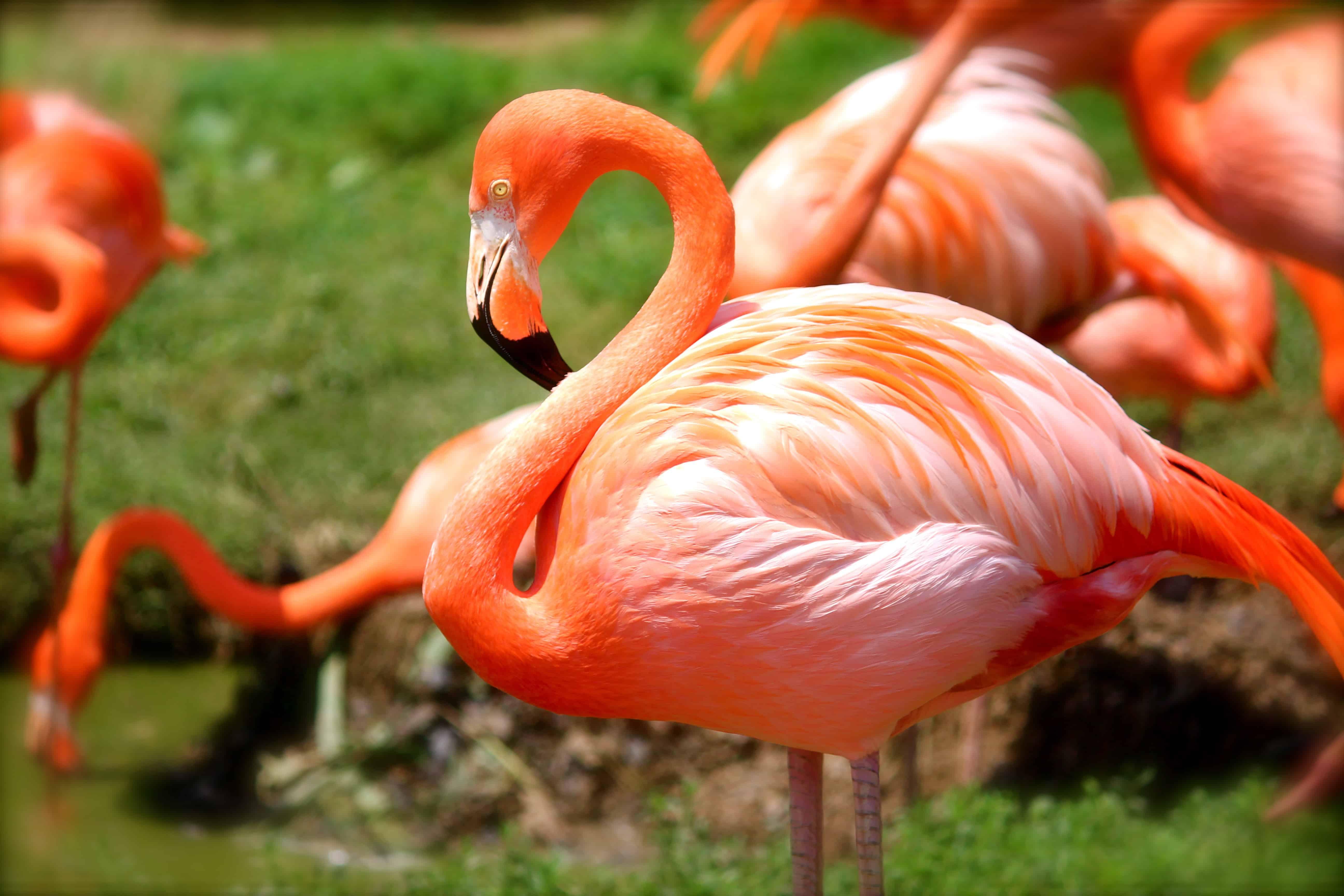 Flamingos en el Parque Nacional Galapagos