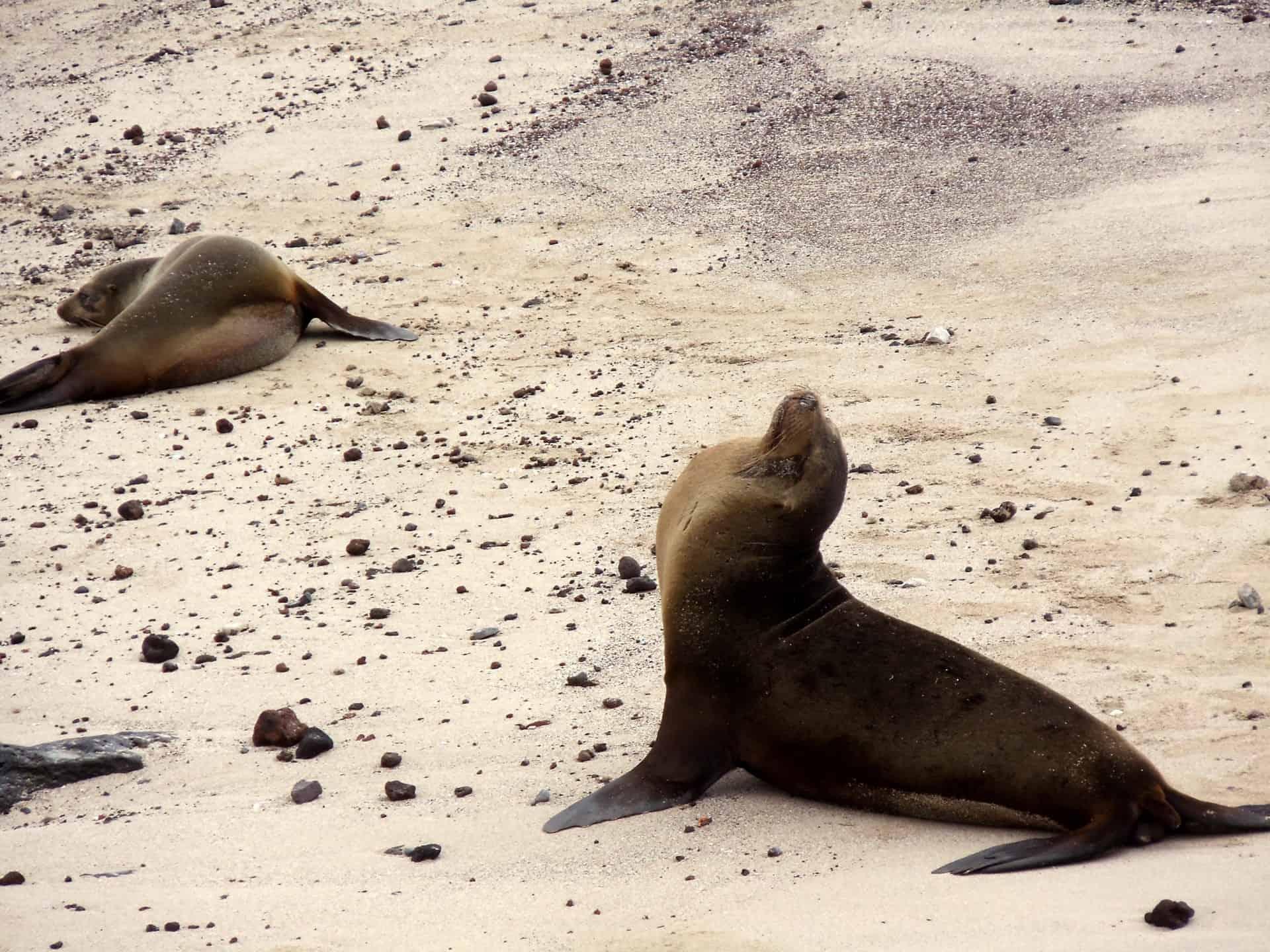 Focas en la playa Galapagos