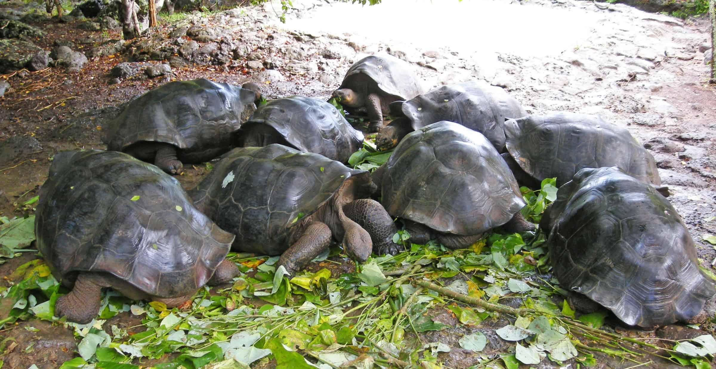tortoise-18210
