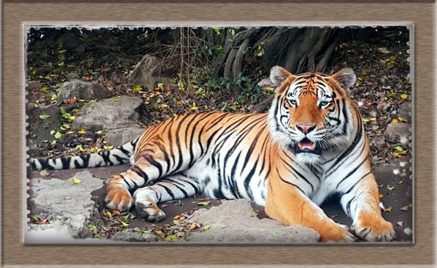 Zoologico el Pantanal