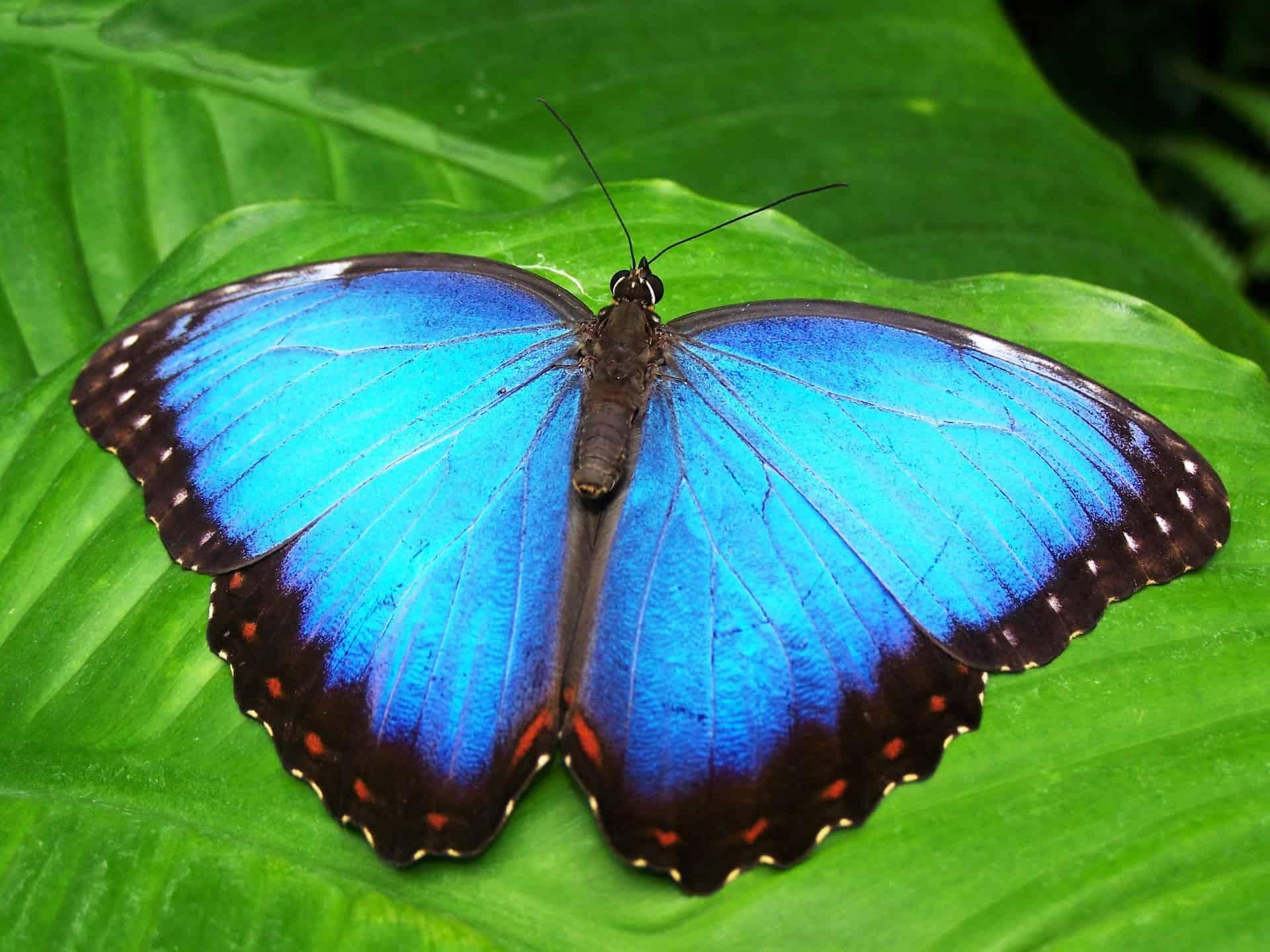 Mariposas de Mindo Ecuador