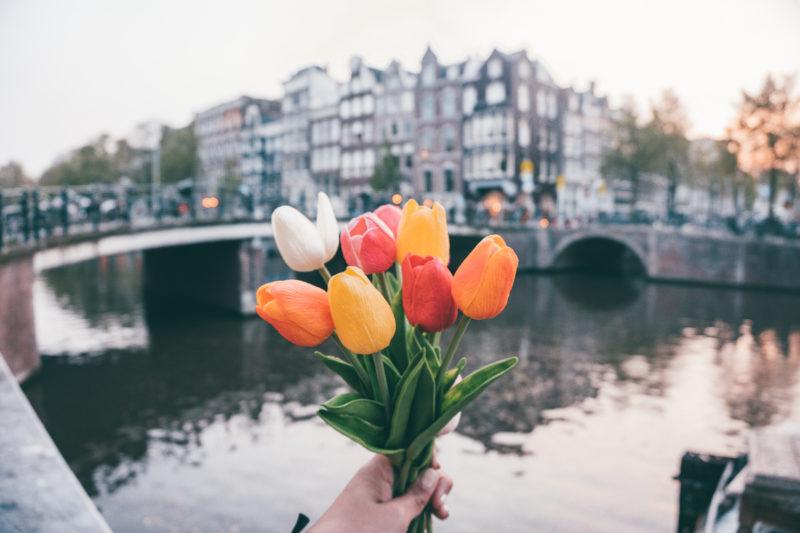 Tulipanes con el fondo de un canal en Amsterdam