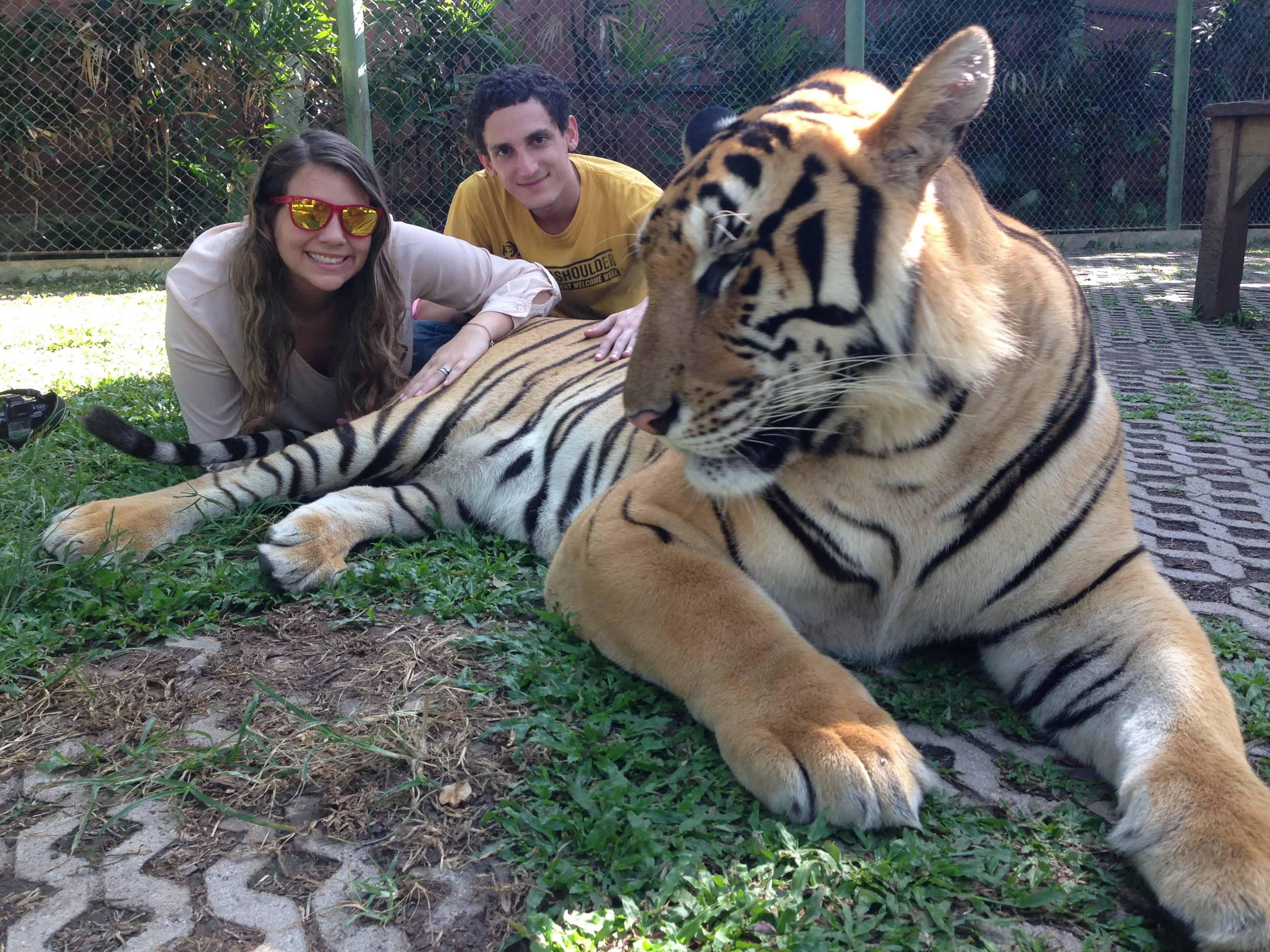 parque reino del tigre - cosas que hacer en phuket
