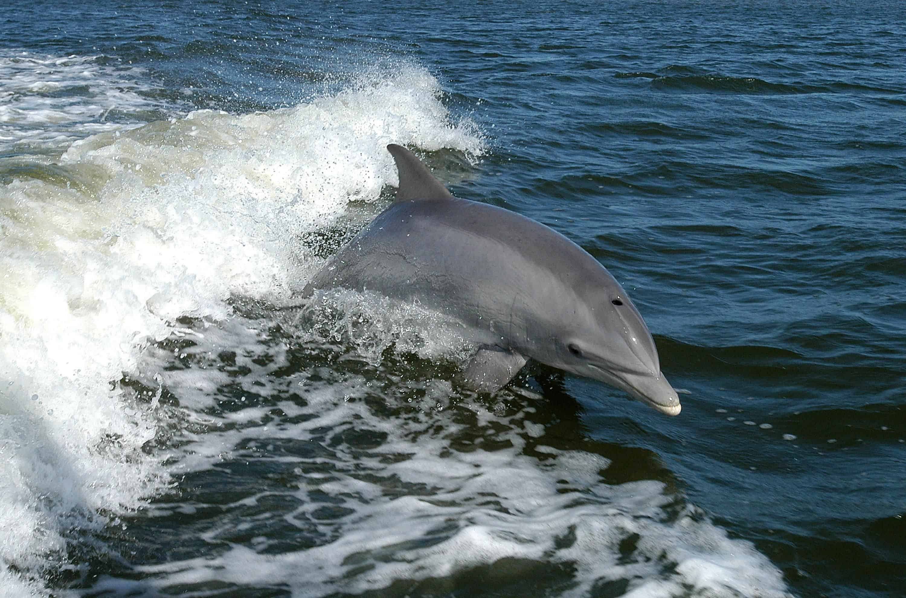 Dolphin Watching in Playas, Ecuador