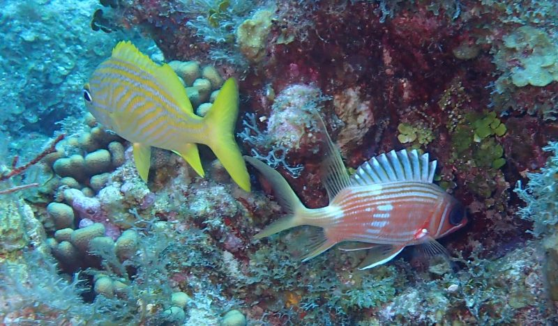 scuba-diving-cayman-islands