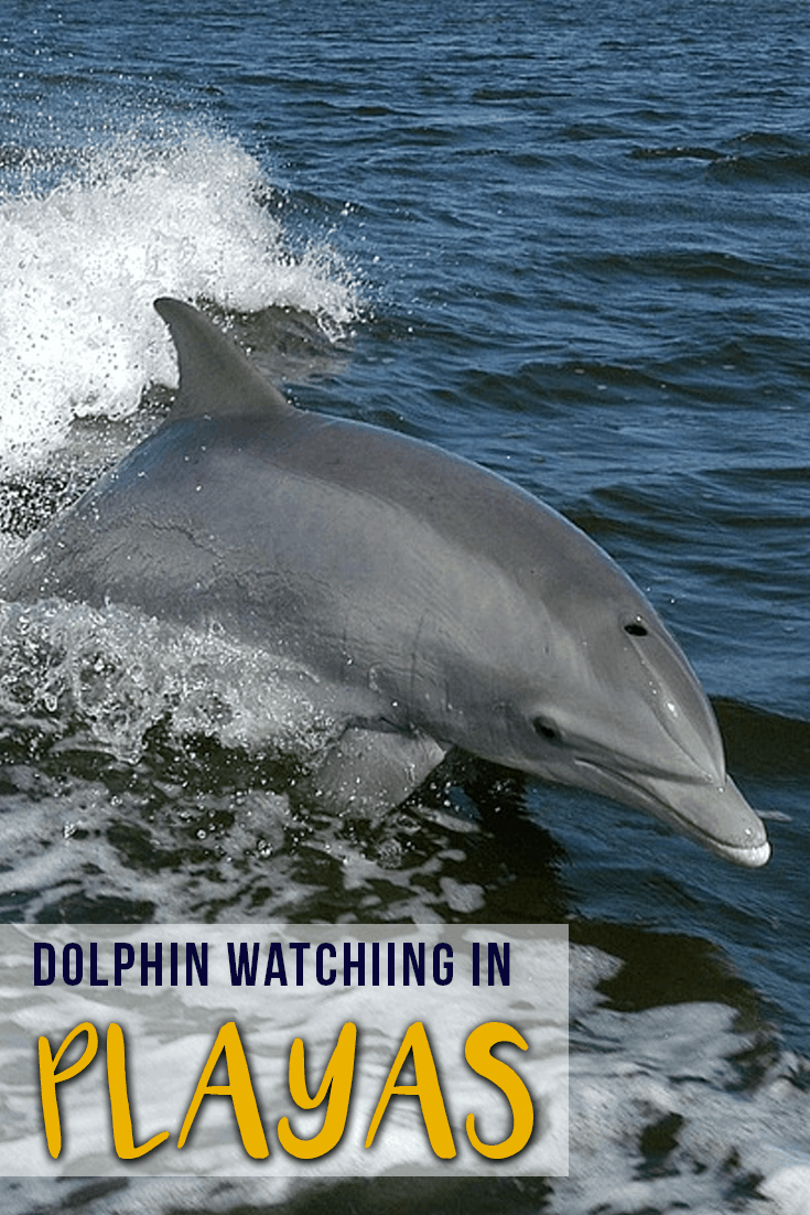 dolphin-watching-playas-ecuador