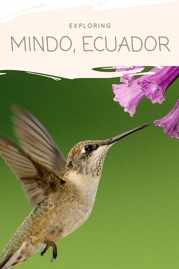 exploring-mindo-ecuador
