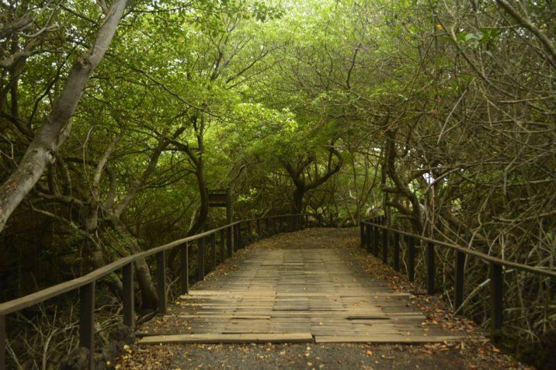 Isla Isabela, Galápagos - lugares que visitar en Ecuador