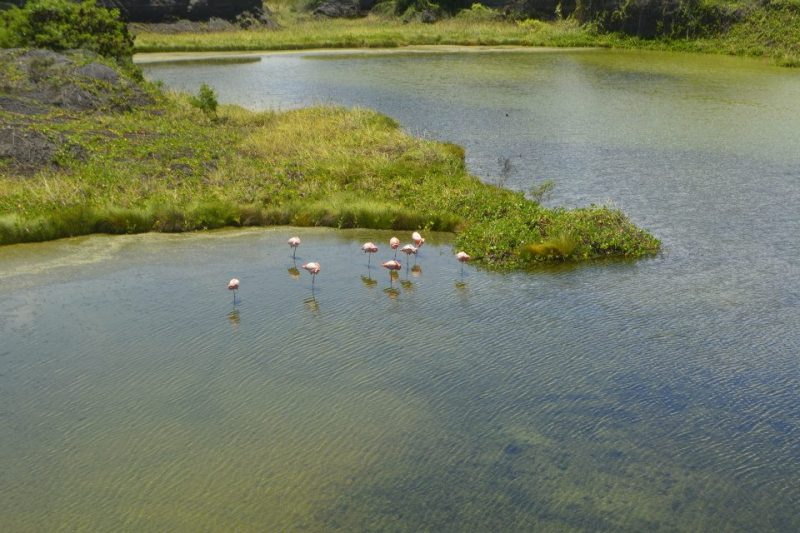 La Piscina de Flamingo Isabella