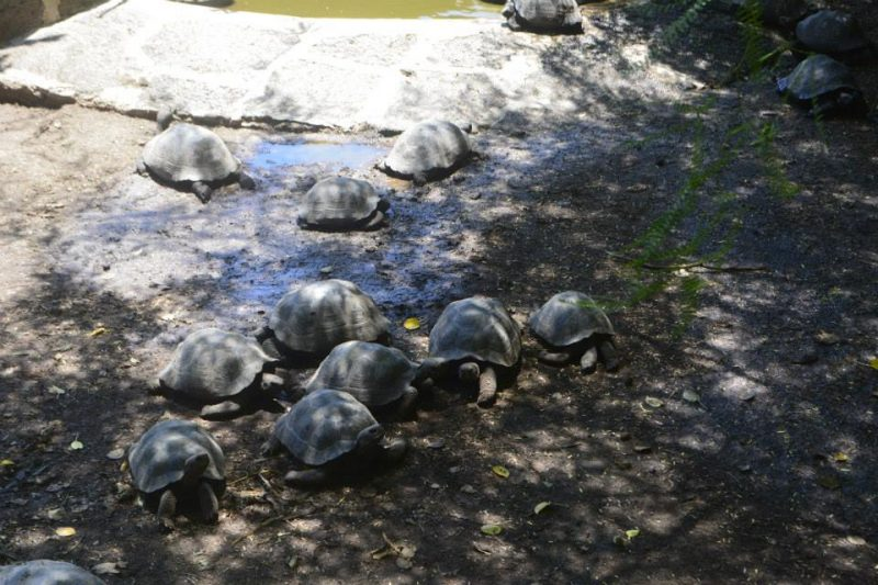 Tortugas Galapagos