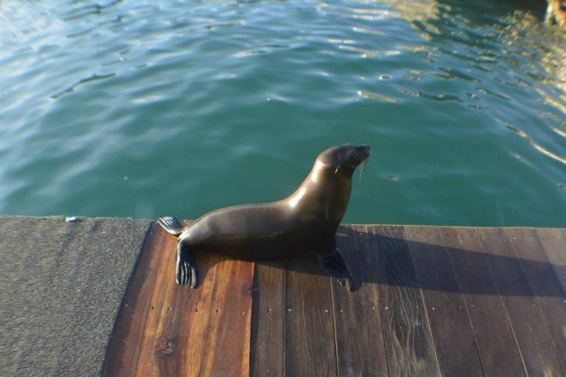 Muelle San Cristobal Galapagos