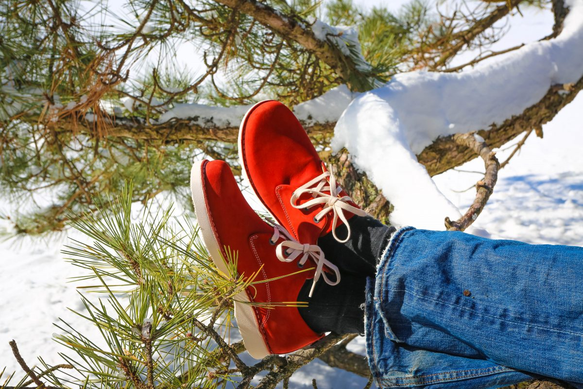 Winter shoes on tree branch
