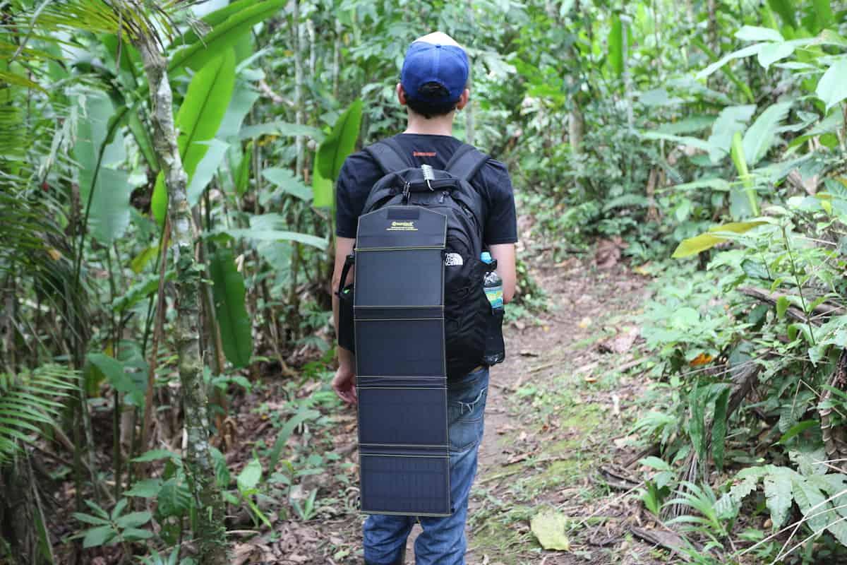 sunjack-rainforest