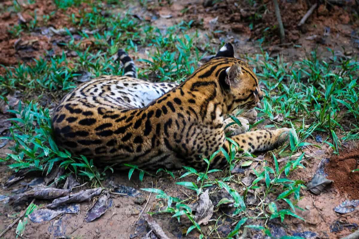 coca zoo - Coca Ecuador - Yasuni National Park