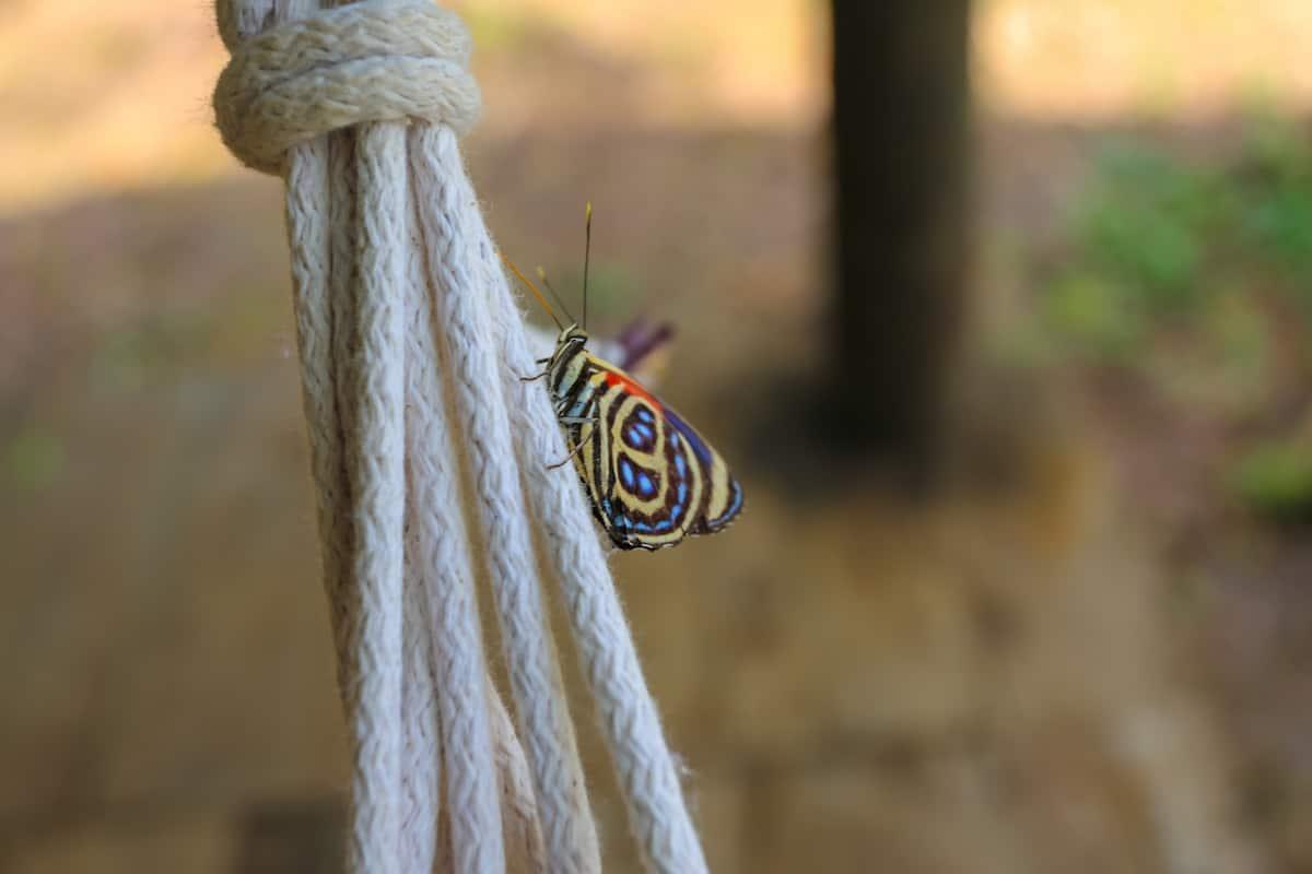 Butterfly - Mandaripanga Yasuni Jungle Expedition - Glamping in Yasuni National Park