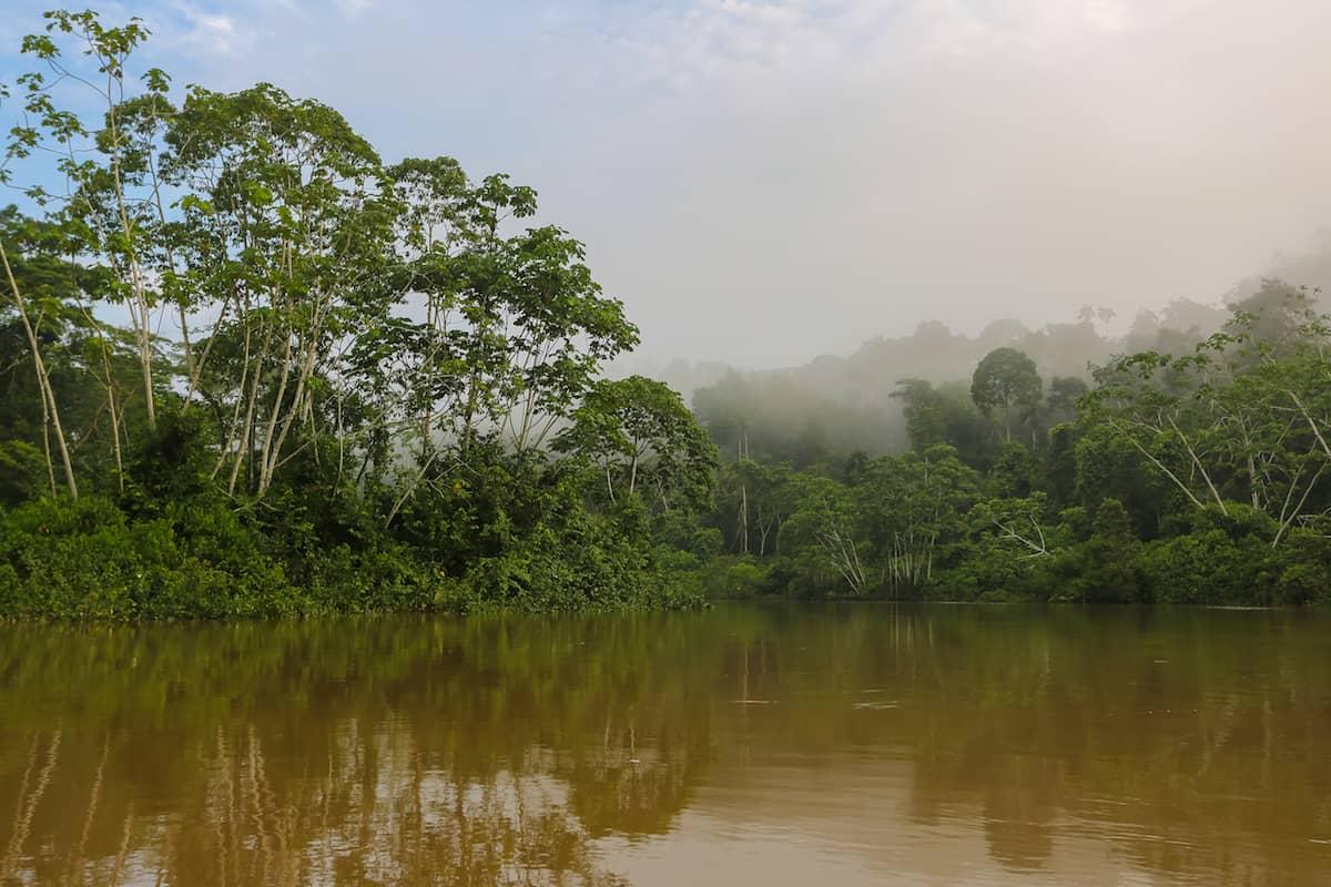 Rainforest - Mandaripanga Yasuni Jungle Expedition - Glamping in Yasuni National Park