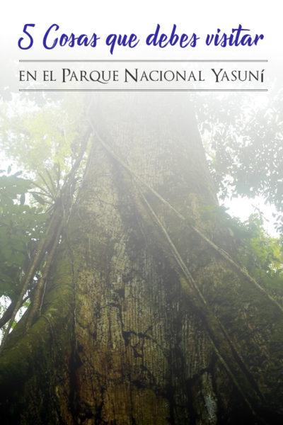 5 cosas que debes visitar en la amazonía ecuatoriana en el Yasuni