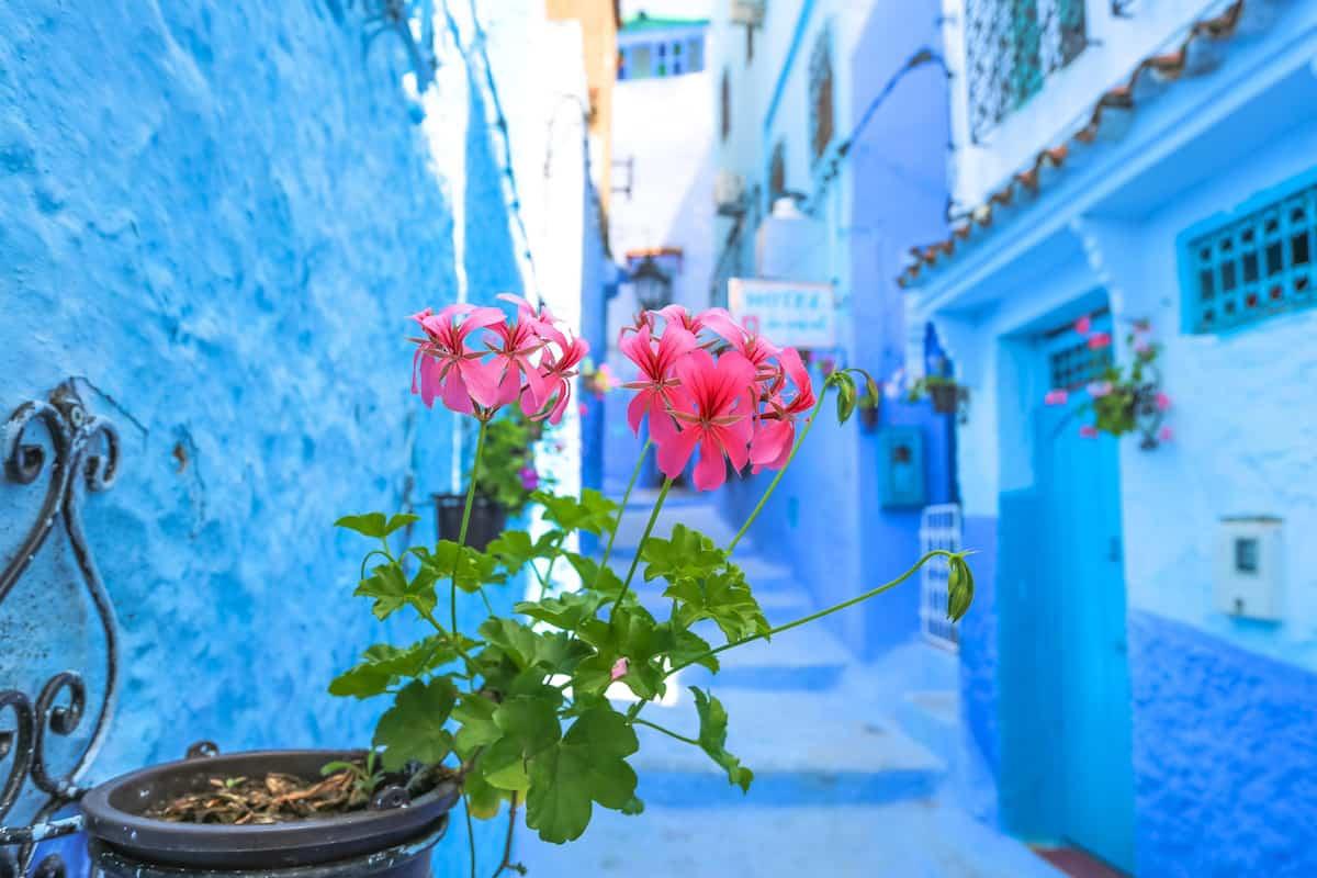 chaouen marruecos fotos