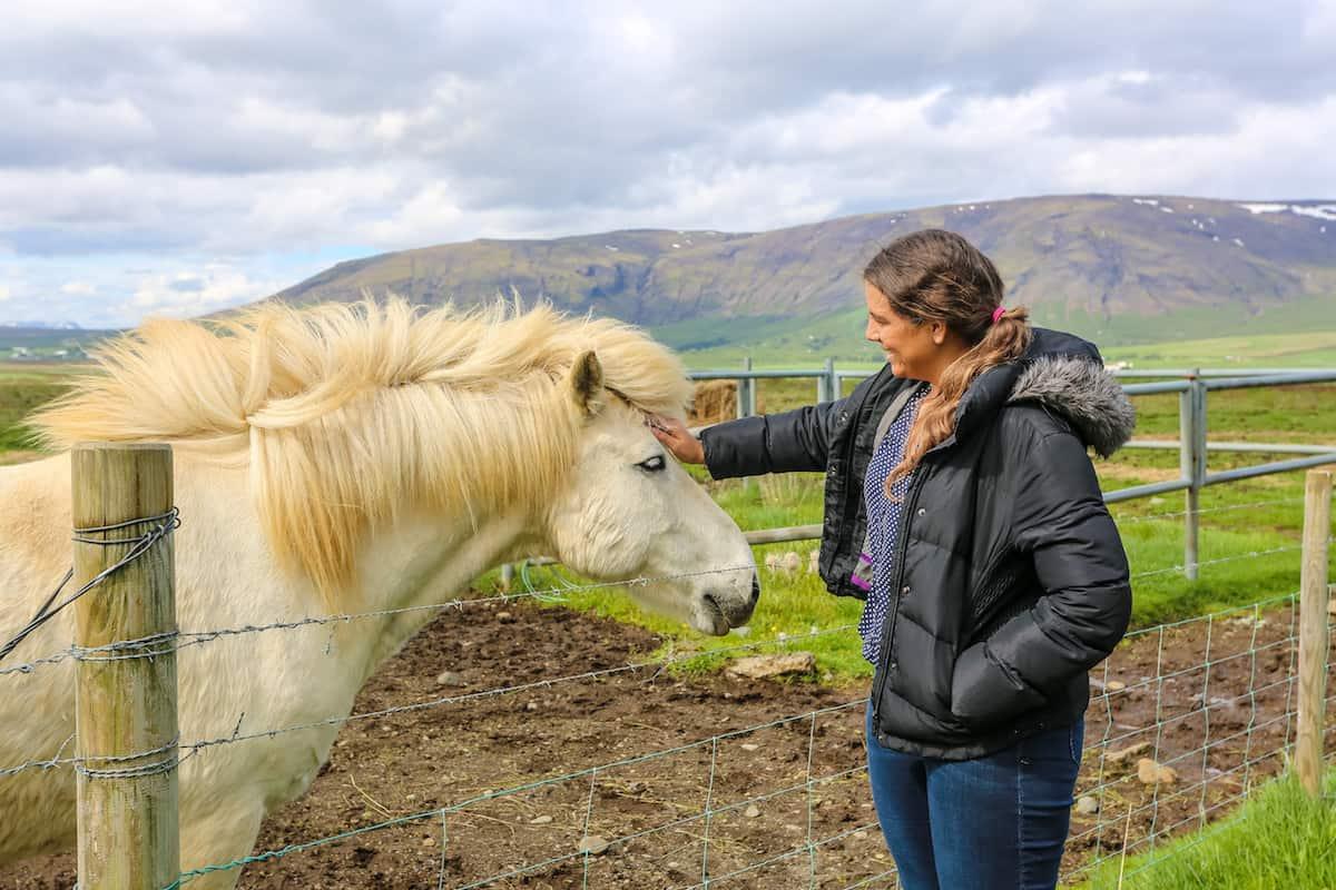 Icelandic Horse Petting