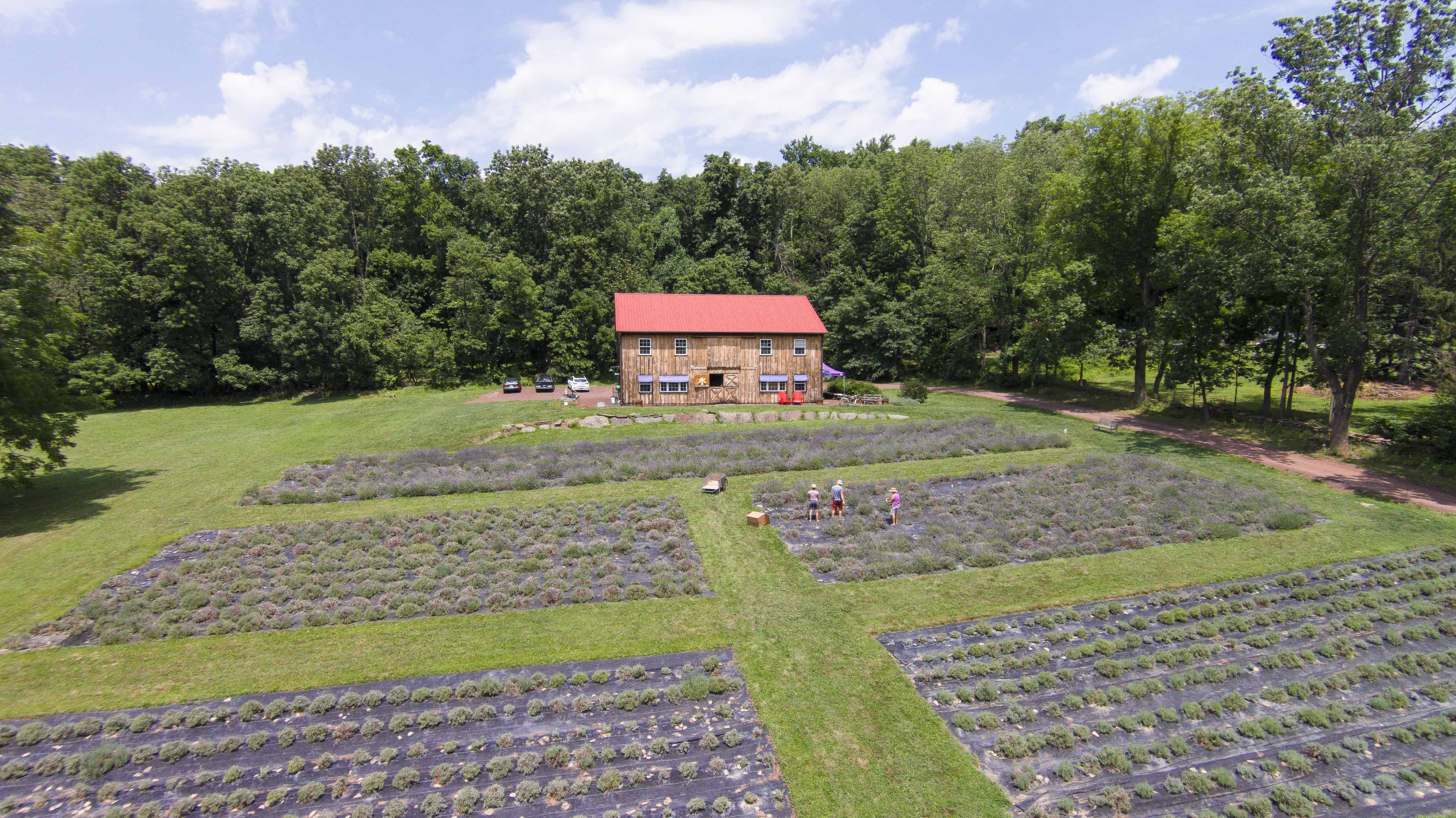 peace-valley-lavender-farm-drone-shot-anthony-sinagoga