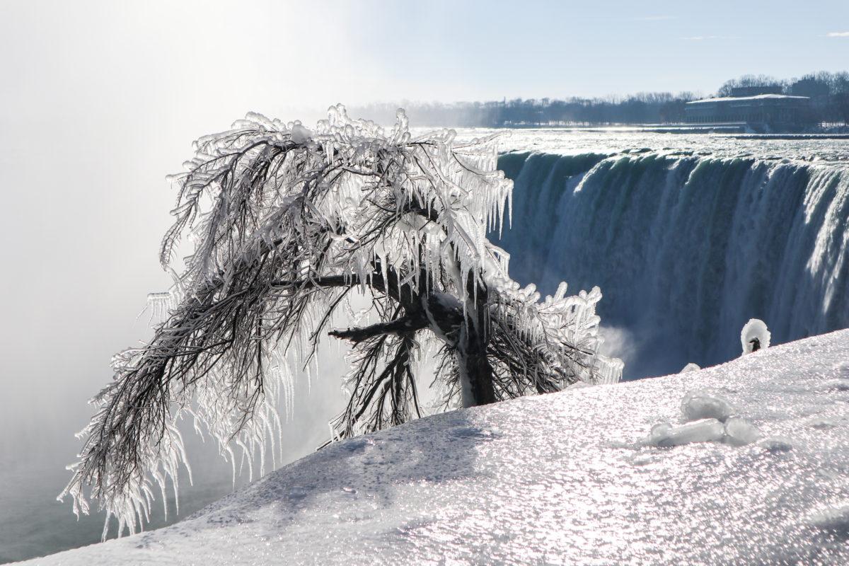 Cataratas del Niágara en Invierno arbol congelado