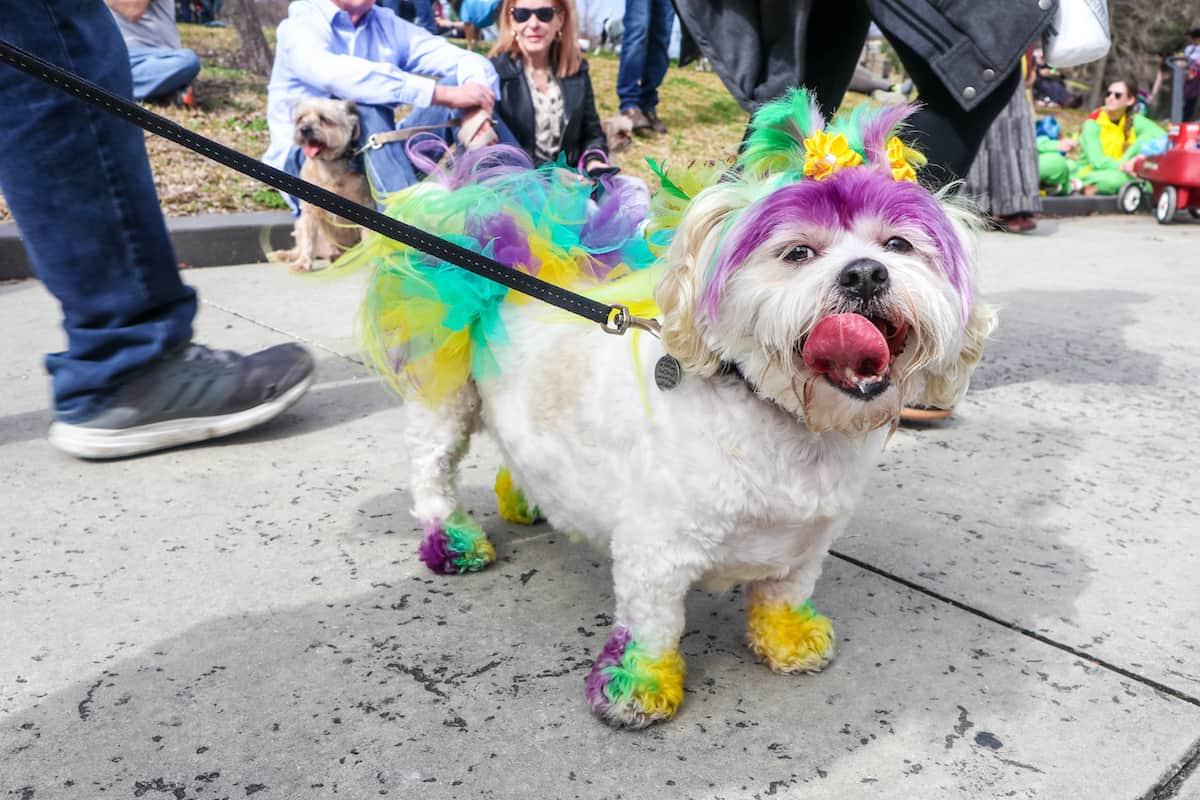 Perro disfrazado de mardi gras - carnaval de new orleans