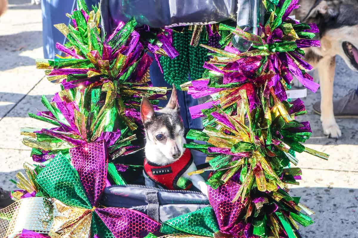 Perro en carrosa mardi gras - carnaval de new orleans