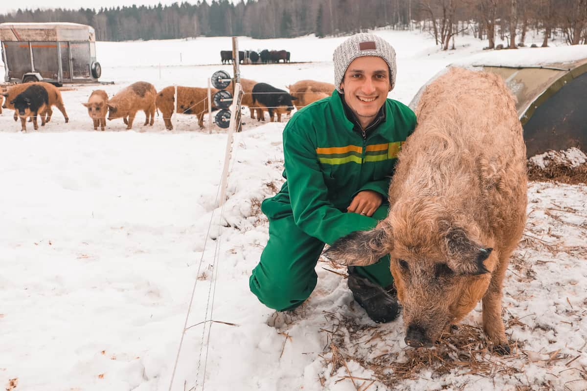 Oslo Norway pig snow
