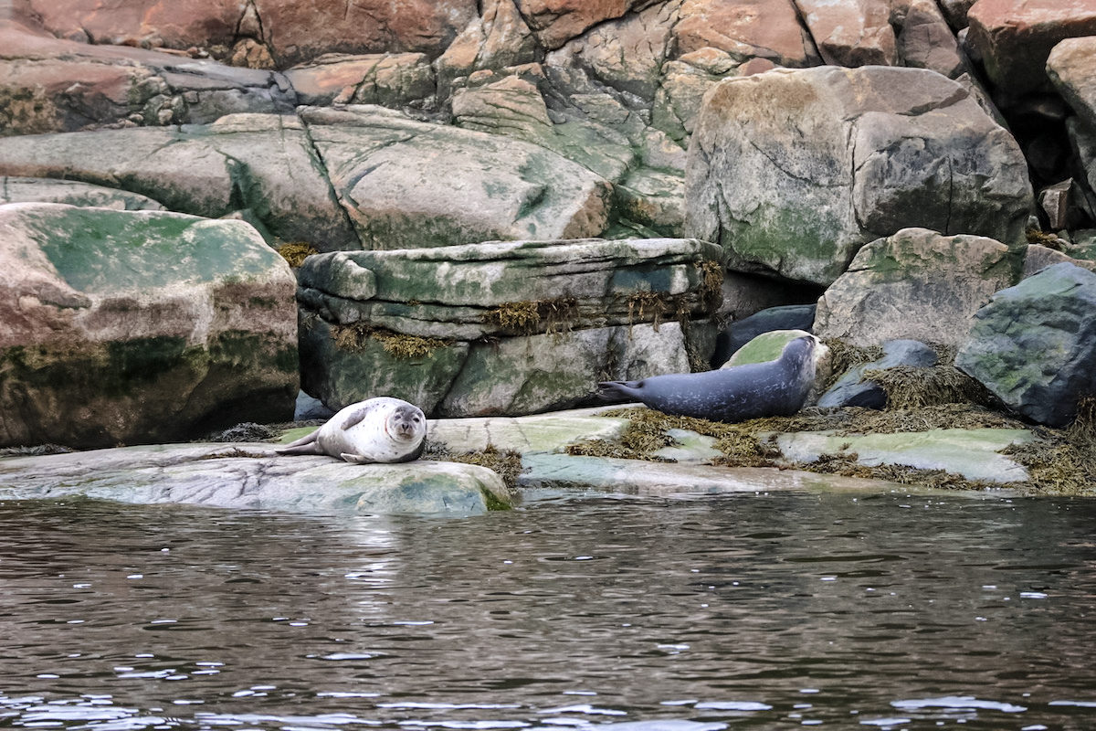 Zodiac excursion in the Saguenay-St. Lawrence Marine park