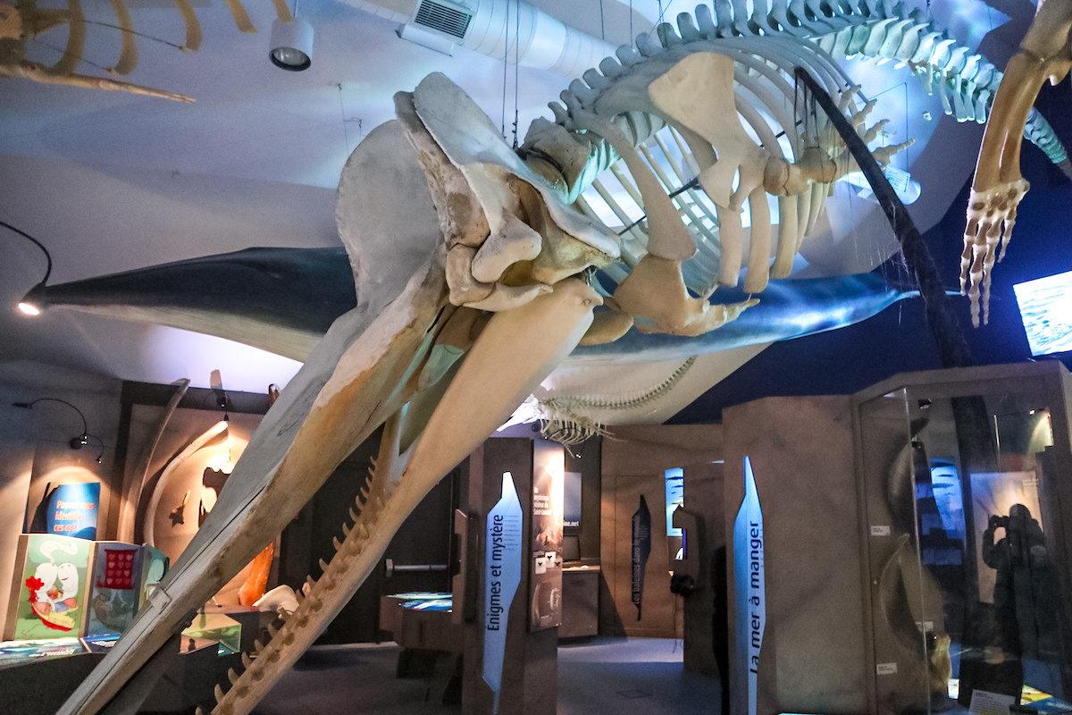 Marine Mammal Interpretation Centre
