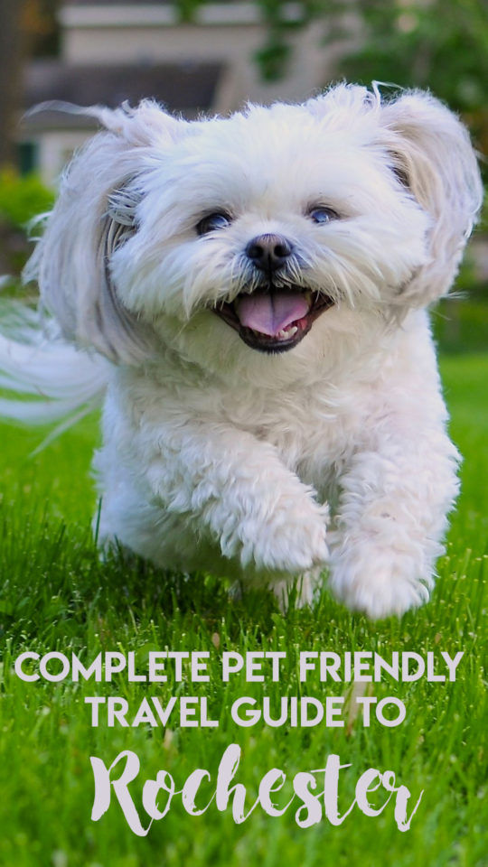 Rochester pet friendly travel Guide