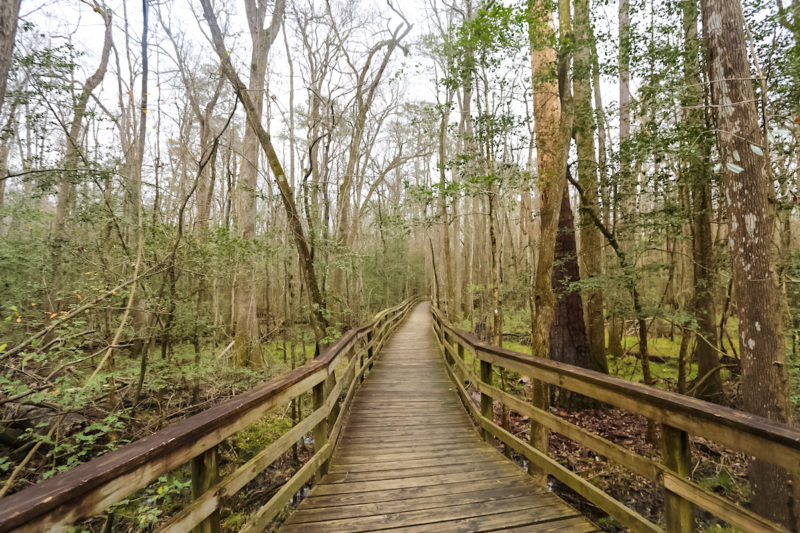 Travel Guide to Visit Congaree National Park