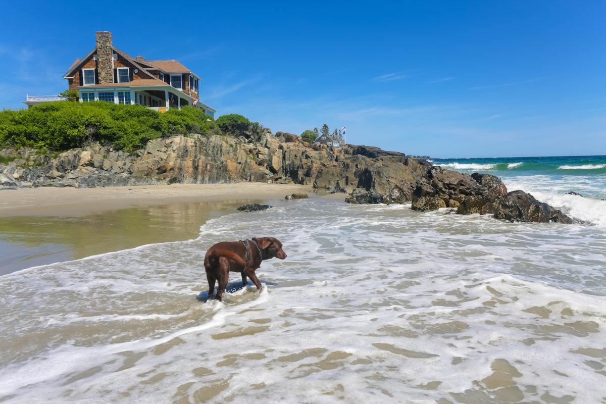 Mother's Beach Pet Friendly