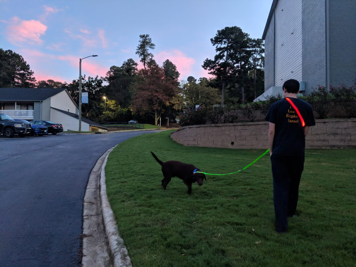 Walking Dog Light Up Leash