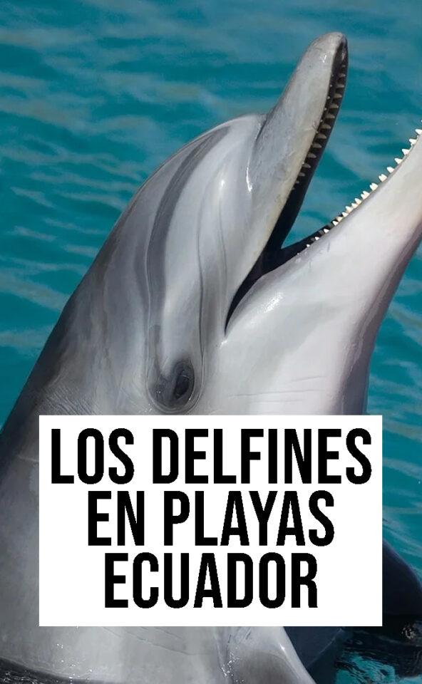 los delfines en playas ecuador