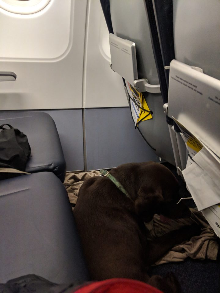 Emotional Support Dog on plane