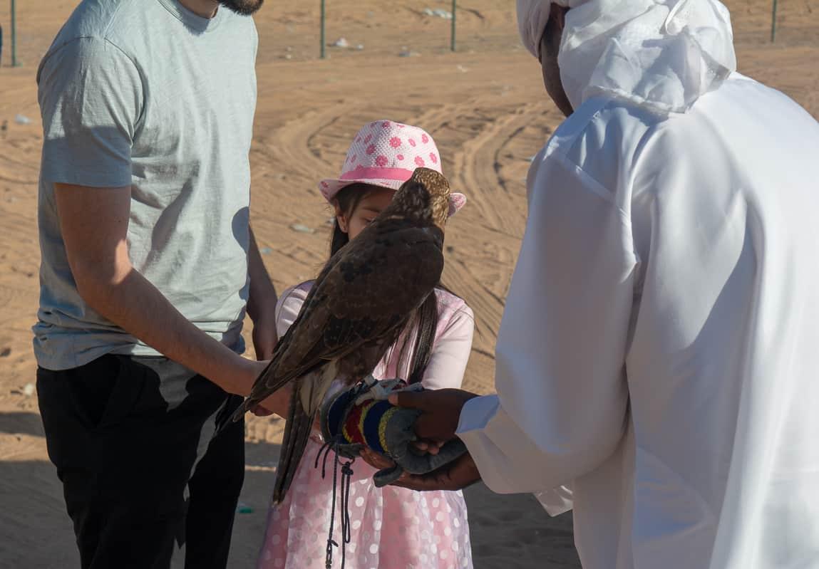 Dubai Desert Falcon