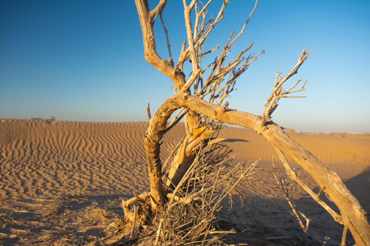 Dubai Desert Sand dunes tree
