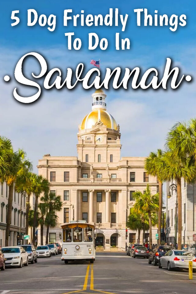 5 dog friendly things to do in Savannah
