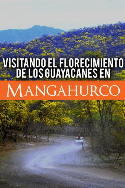 Visitando el florecimiento de los Guayacanes en Mangahurco Ecuador