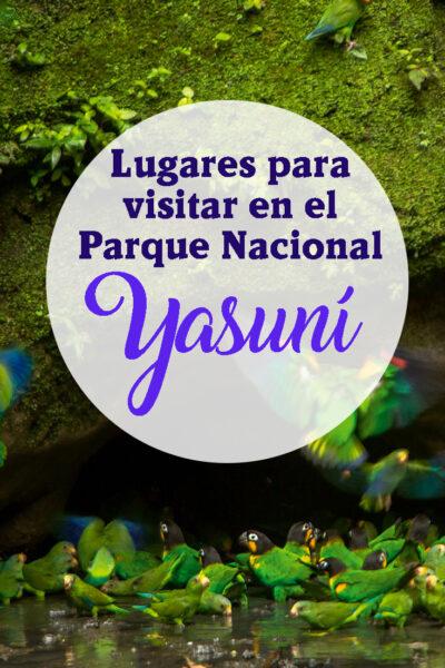 Los mejores lugares para visitar en el Parque Nacional Yasuní