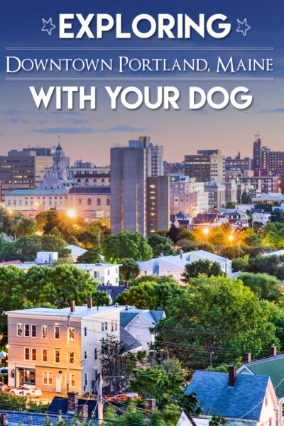 Exploring Downtown Portland Maine With Your Dog