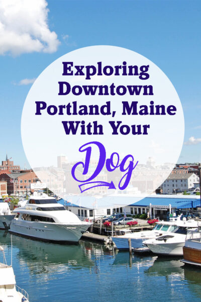 Exploring Downtown Portland, Maine, With Your Dog