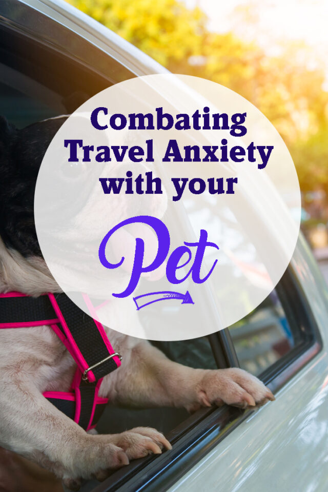 Combating Travel Anxiety with your pet