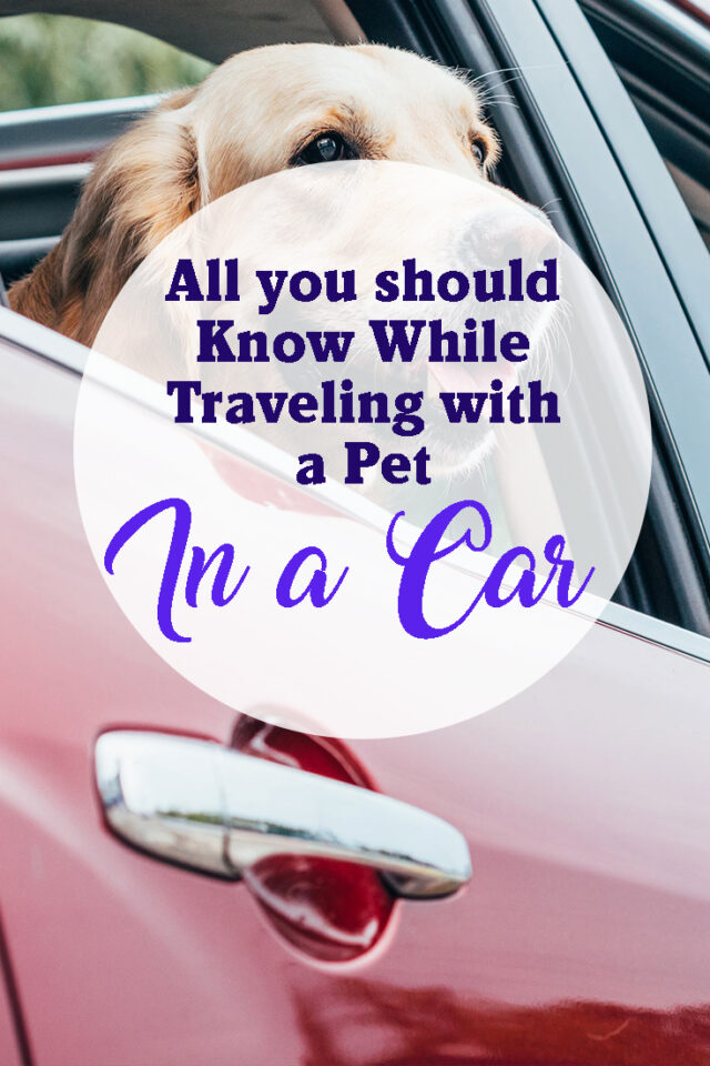 All you should know while traveling with a pet in a car