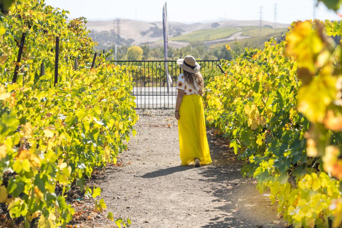 Crooked Vine & Stony Ridge Winery-3